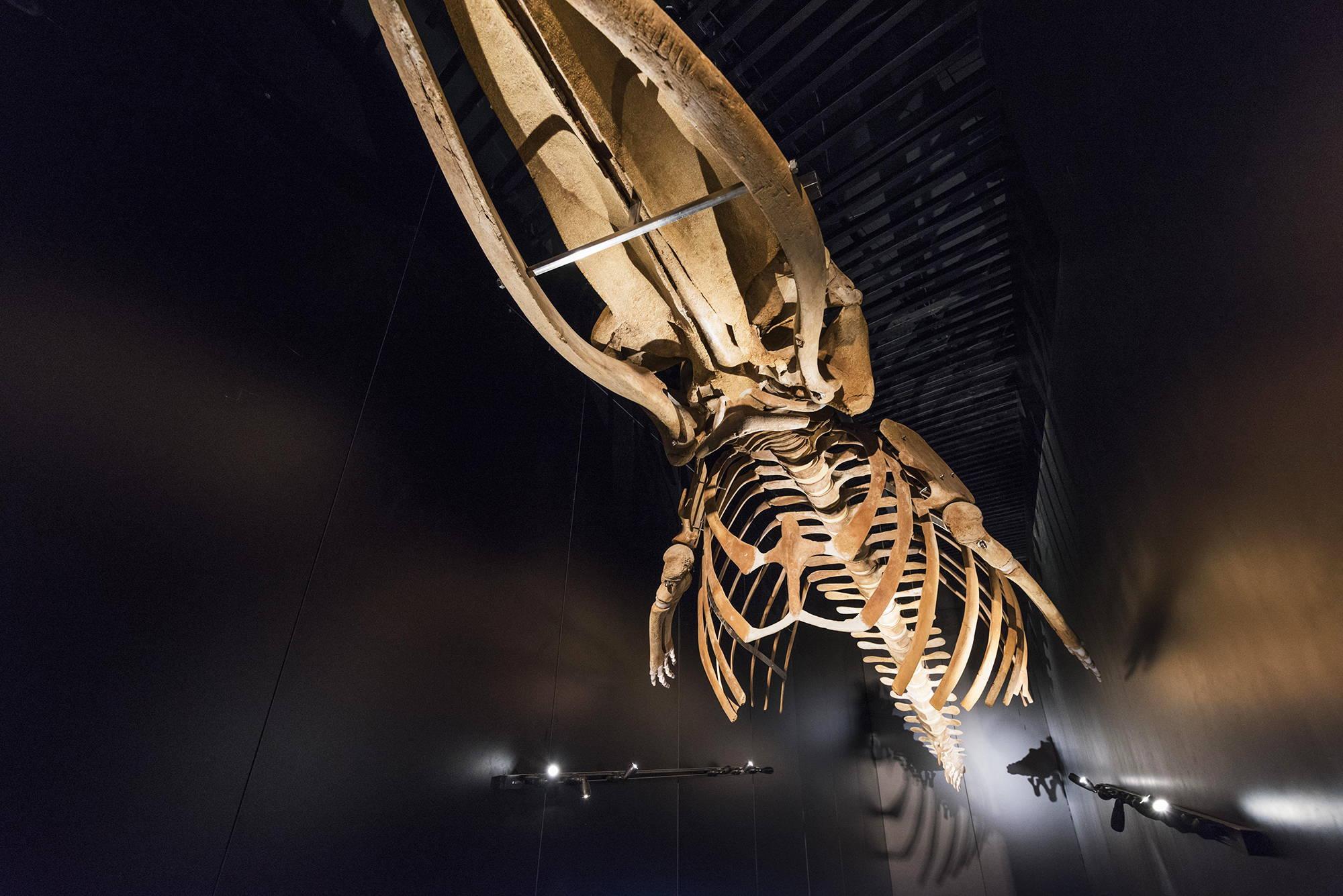 Iluminación para museos y exposiciones. Aquarium San Sebastián
